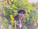 Chẳng cần đi Đà Lạt, ngay tại Hà Nội cũng có đồi hoa dã quỳ đẹp xuất sắc