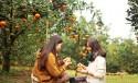 Vườn cây ăn trái Cái Mơn – Chợ Lách, điểm đến du lịch sinh thái ở miền Tây