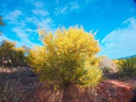 Du Lịch Mũi Né - Rừng hoa keo lá tràm
