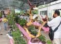 Du lịch về miền Tây tham dự lễ hội trái cây ngon, an toàn Bến Tre 2015