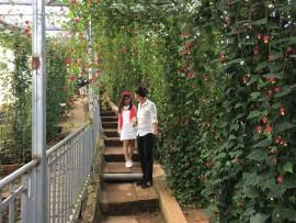 Hướng dẫn đường đi đến làng hoa vạn thành đà lạt?