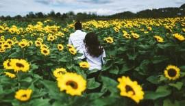 Thông tin các vườn hoa đẹp ở đà lạt