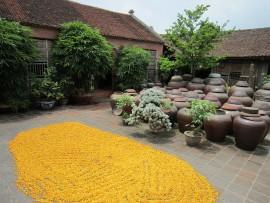 Giới thiệu về du lịch Làng cổ Đường Lâm ở Hà Nội