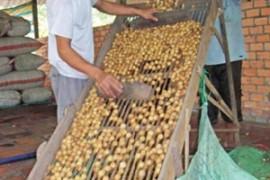 Tour Đà Nẵng – Sài Gòn – Chợ Nổi Cái Răng – Tây Ninh 4 Ngày 3 Đêm