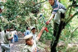 Tour Đà Nẵng - Sài Gòn - Mũi Né 4 Ngày