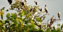 Vườn cò Bằng Lăng – Điểm đến du lịch hấp dẫn