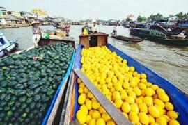 Tour Du Lịch Sài Gòn - Tây Ninh - Mỹ Tho - Bến Tre - Cần Thơ 5 Ngày