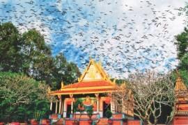 Tour Du Lịch Sài Gòn - Cà Mau - Bạc Liêu - Sóc Trăng - Cần Thơ 4 Ngày 3 Đêm