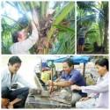 Đặc sản Bến Tre – Chuột dừa