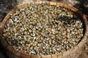 Đặc sản Tiền Giang - Ốc gạo Tân Phong