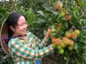 Du lịch Bến Tre – Vườn cây ăn trái Cái Mơn