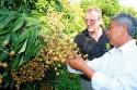 Du Lịch Đồng Tháp – Vườn Cây Trái Đồng Tháp