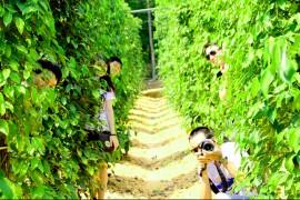 Tour Du Lịch Đà Lạt - Phú Quốc 4 Ngày 3 Đêm