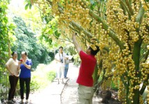 Tour Châu Đốc - Hà Tiên - Cà Mau - Bạc Liêu - Sóc Trăng - Cần Thơ - Phú Quốc 8 Ngày