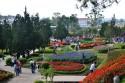 Vườn hoa Đà Lạt điểm đến thú vị cho du khách