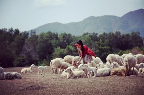 Địa chỉ cánh đồng cừu Vũng Tàu ở đâu?