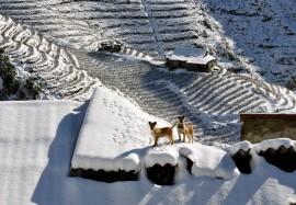 Du lịch Sapa tháng 12 – Tìm kiếm giấc mơ tuyết trắng
