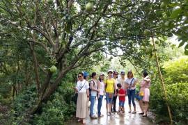 Tour Đà Nẵng - Sài Gòn - Tây Ninh - Cần Thơ 4 Ngày 3 Đêm