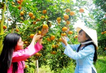 Tour Du Lịch Hà Nội - Sài Gòn - Cà Mau - Bạc Liêu - Sóc Trăng - Cần Thơ 5 Ngày 4 Đêm