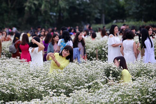 Description: Những địa điểm chụp ảnh cúc hoạ mi đẹp tinh khôi không thể bỏ lỡ ở Hà Nội - 4