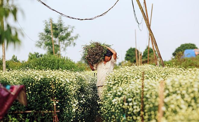 Description: Những địa điểm chụp ảnh cúc hoạ mi đẹp tinh khôi không thể bỏ lỡ ở Hà Nội - 5