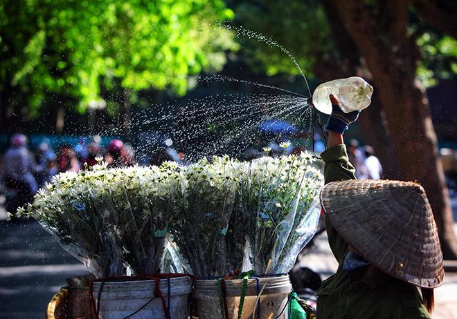 Description: Những địa điểm chụp ảnh cúc hoạ mi đẹp tinh khôi không thể bỏ lỡ ở Hà Nội - 8
