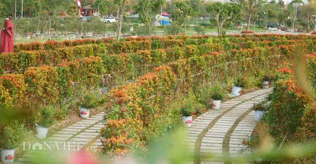 Description: Clip: Mê cung hoa lớn nhất Việt Nam đẹp như cổ tích ở Hà Nội - 4