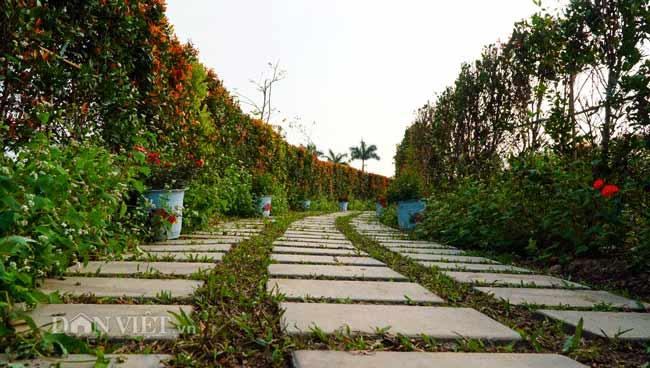 Description: Clip: Mê cung hoa lớn nhất Việt Nam đẹp như cổ tích ở Hà Nội - 7