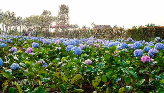 Description: Clip: Mê cung hoa lớn nhất Việt Nam đẹp như cổ tích ở Hà Nội - 12