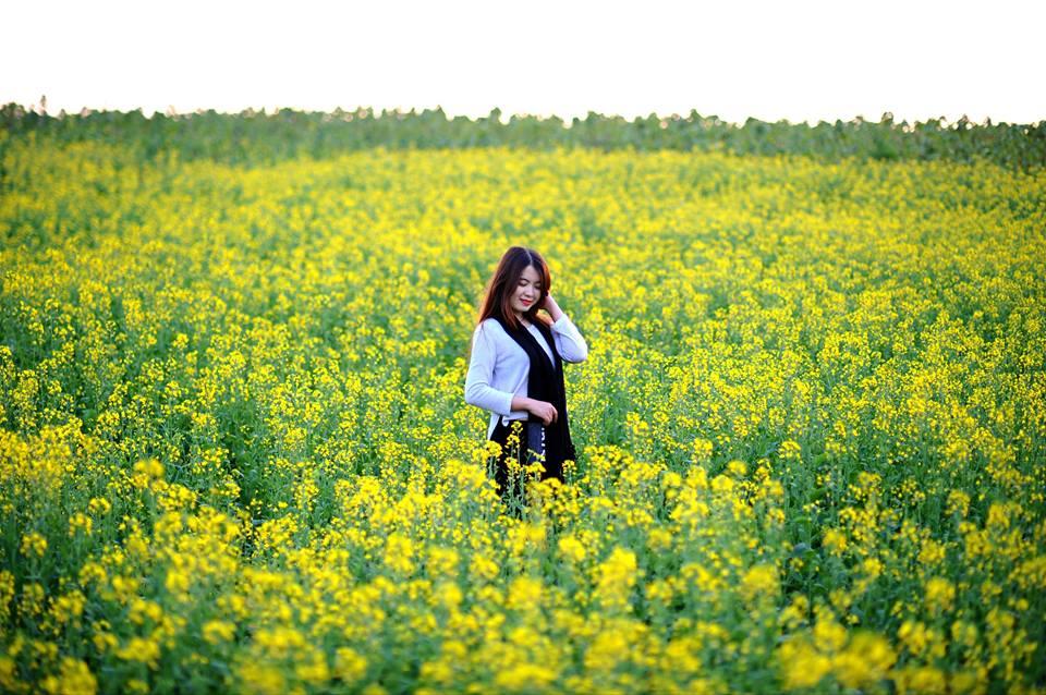 Description: Ngẩn ngơ ngắm cánh đồng hoa cải vàng nở rộ ở ngoại thành Hà Nội - 4