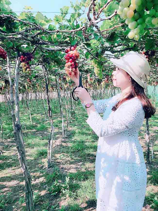 Description: Về Ninh Thuận thỏa thích hái nho đầy túi, lại săn ảnh đẹp mang về - 5
