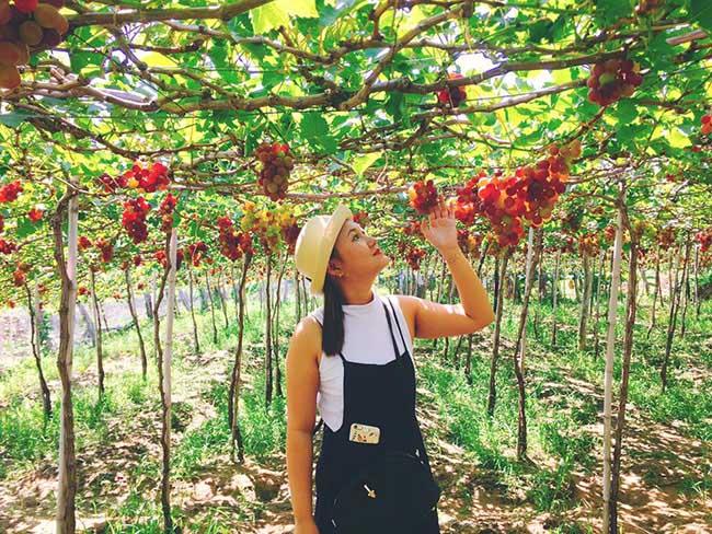 Description: Về Ninh Thuận thỏa thích hái nho đầy túi, lại săn ảnh đẹp mang về - 7
