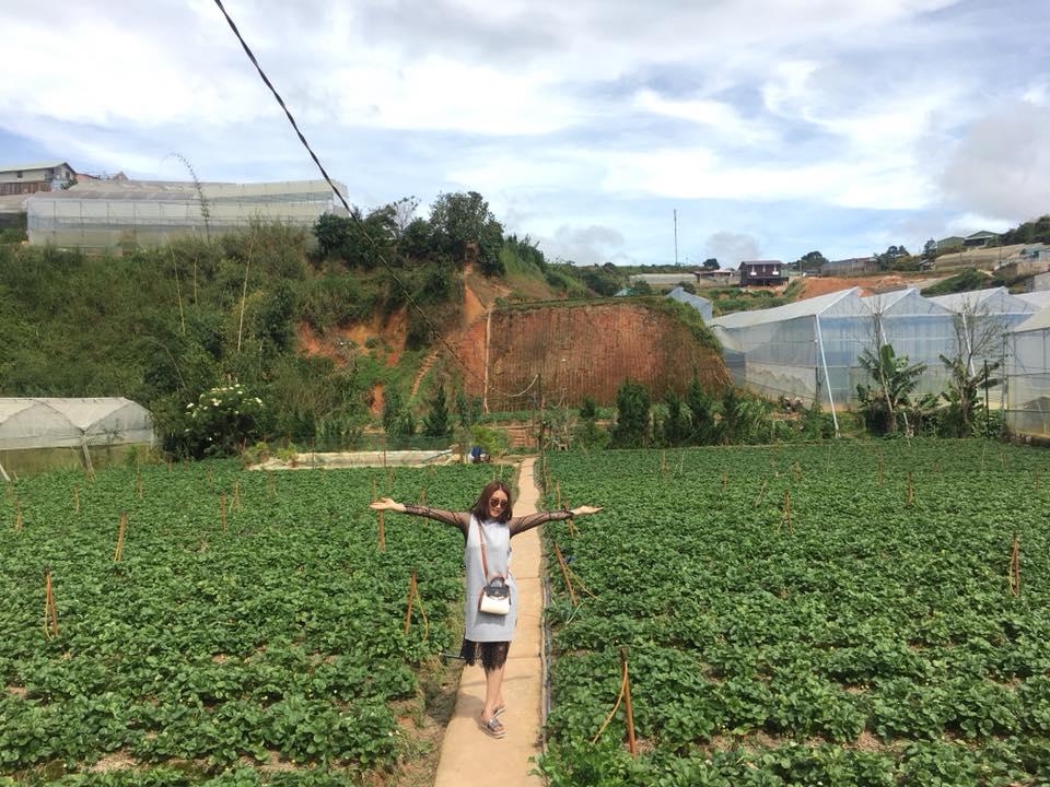 Description: Lên Đà Lạt một ngày làm nông dân thu hoạch dâu tây - 1