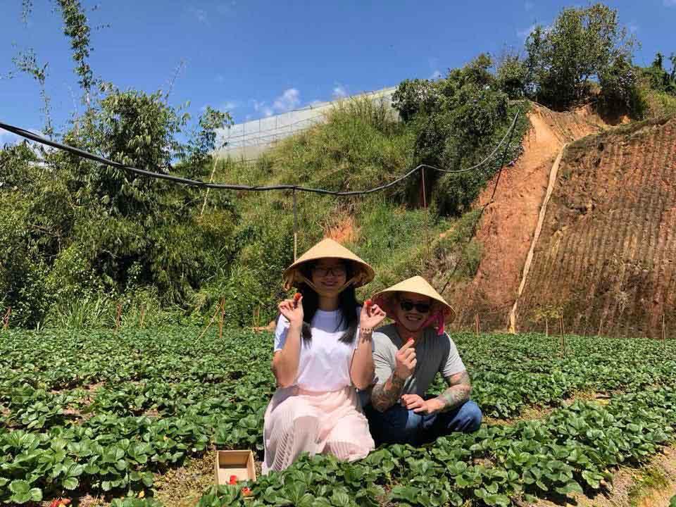 Description: Lên Đà Lạt một ngày làm nông dân thu hoạch dâu tây - 6