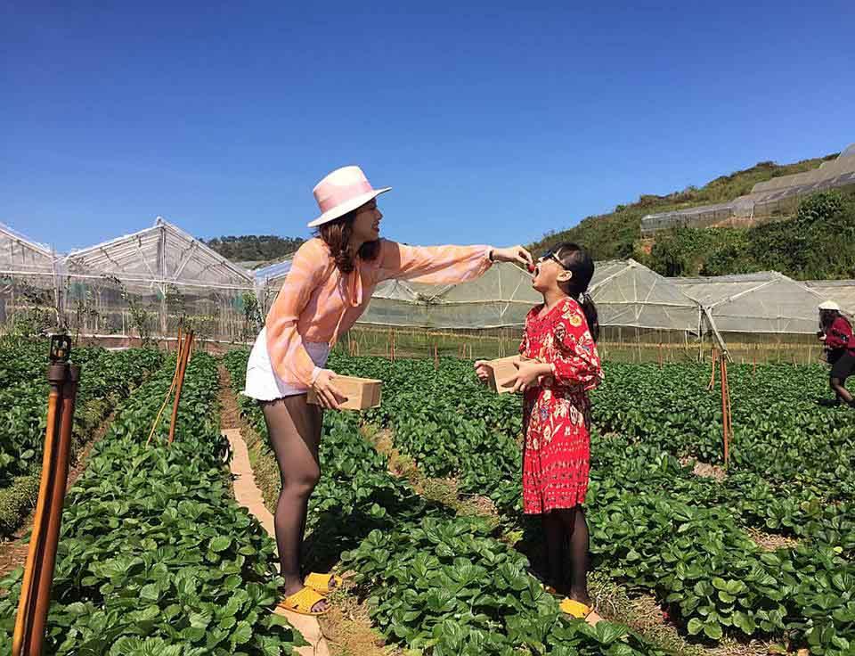 Description: Lên Đà Lạt một ngày làm nông dân thu hoạch dâu tây - 7