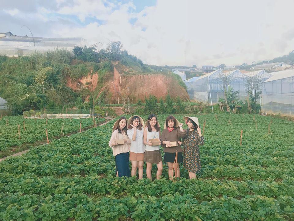 Description: Lên Đà Lạt một ngày làm nông dân thu hoạch dâu tây - 9