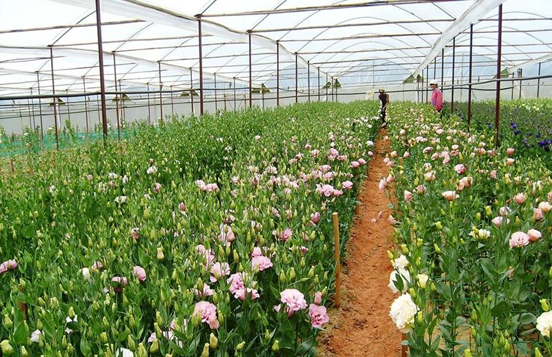 Giá vé tham quan làng hoa vạn thành ở Đà Lạt mới nhất 2020 | Viet ...