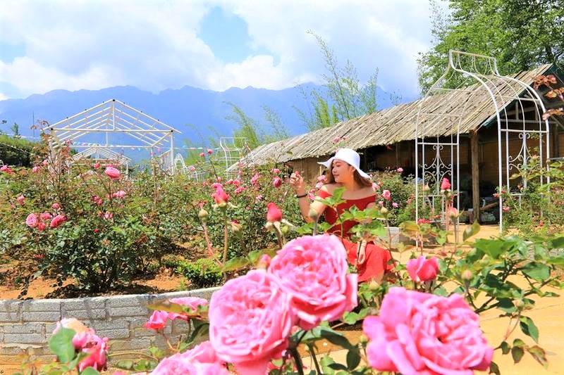 Địa điểm Thung lũng hoa hồng Sapa