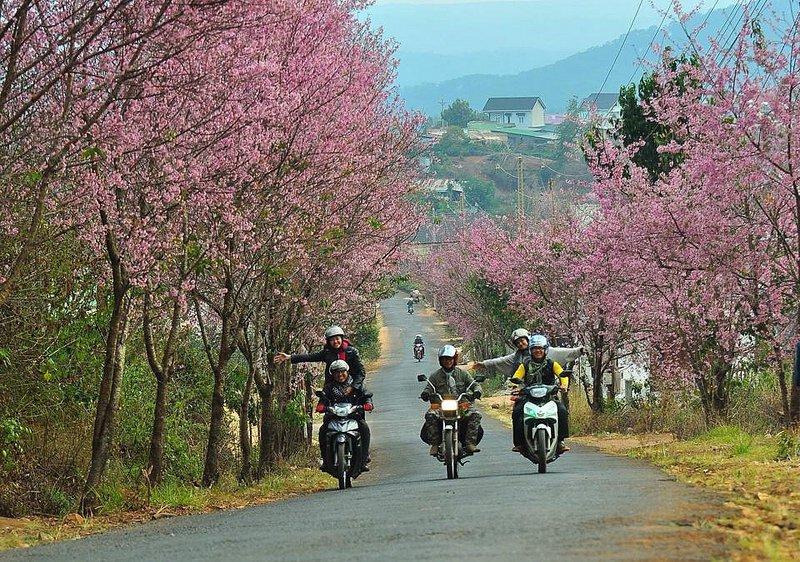 Xe máy được rất nhiều bạn trẻ lựa chọn khi du lịch Đà Lạt.