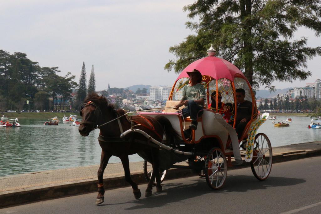 Xe ngựa là một phương tiện thú vị để khám phá Đà Lạt.