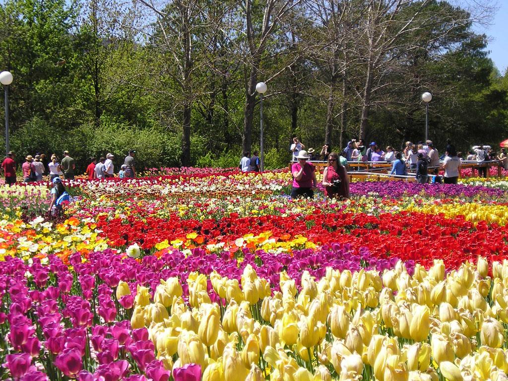 Hàng nghìn loại hoa đua nhau khoe sắc trong Festival hoa Đà Lạt