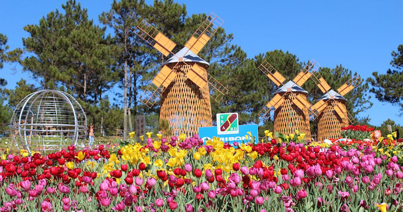 Một góc vườn xinh đẹp trong Festival hoa Đà Lạt