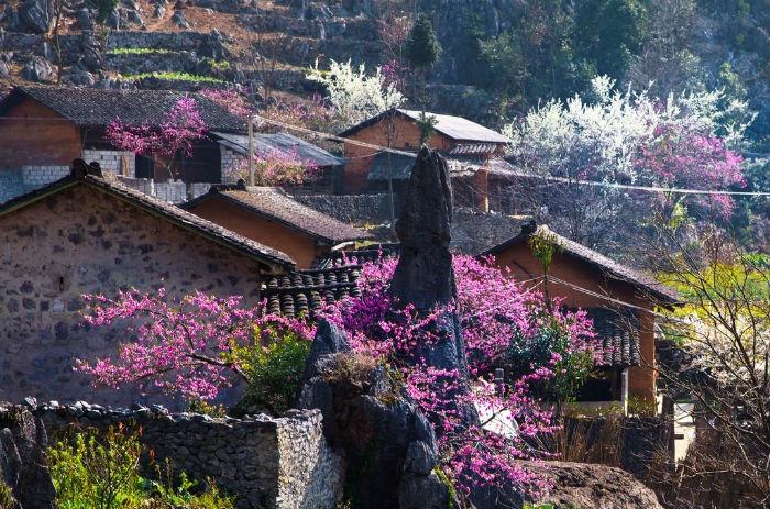 Sapa mùa xuân với trăm hoa khoe sắc